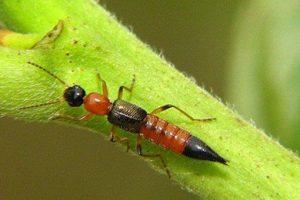 Dịch vụ phun thuốc diệt kiến ba khoang Bình Đan là lựa chọn hàng đầu cho các hộ gia đình
