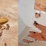 Chia sẻ kinh nghiệm diệt mọt gỗ hiệu quả nhất hiện nay